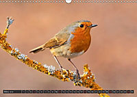 Singvögel (Wandkalender 2018 DIN A3 quer) - Produktdetailbild 3