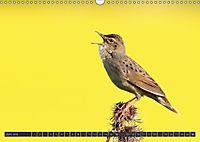 Singvögel (Wandkalender 2018 DIN A3 quer) - Produktdetailbild 6