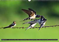 Singvögel (Wandkalender 2018 DIN A3 quer) - Produktdetailbild 8