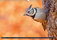 Singvögel (Wandkalender 2018 DIN A3 quer) - Produktdetailbild 10