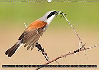 Singvögel (Wandkalender 2018 DIN A3 quer) - Produktdetailbild 7