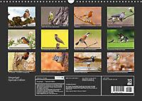 Singvögel (Wandkalender 2018 DIN A3 quer) - Produktdetailbild 13