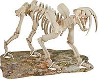 Skelett-Modell Säbelzahntiger - Produktdetailbild 1