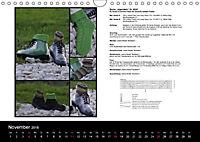 Sockenkalender Bootsocks 2018 (Wandkalender 2018 DIN A4 quer) - Produktdetailbild 11