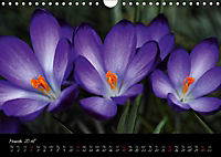 Soul-Jazz Visual Music of Flowers (Wall Calendar 2018 DIN A4 Landscape) - Produktdetailbild 3