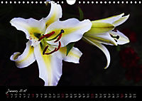Soul-Jazz Visual Music of Flowers (Wall Calendar 2018 DIN A4 Landscape) - Produktdetailbild 1