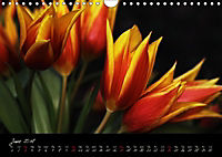Soul-Jazz Visual Music of Flowers (Wall Calendar 2018 DIN A4 Landscape) - Produktdetailbild 6