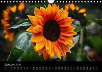 Soul-Jazz Visual Music of Flowers (Wall Calendar 2018 DIN A4 Landscape) - Produktdetailbild 9