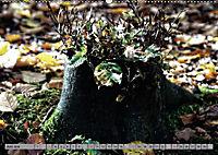 Spaziergang durch den Zauberwald (Wandkalender 2018 DIN A2 quer) - Produktdetailbild 6