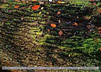 Spaziergang durch den Zauberwald (Wandkalender 2018 DIN A2 quer) - Produktdetailbild 3