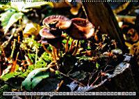 Spaziergang durch den Zauberwald (Wandkalender 2018 DIN A2 quer) - Produktdetailbild 1