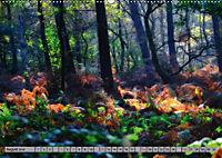 Spaziergang durch den Zauberwald (Wandkalender 2018 DIN A2 quer) - Produktdetailbild 8
