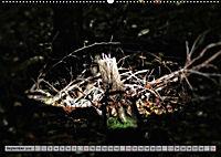 Spaziergang durch den Zauberwald (Wandkalender 2018 DIN A2 quer) - Produktdetailbild 9