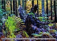 Spaziergang durch den Zauberwald (Wandkalender 2018 DIN A2 quer) - Produktdetailbild 11
