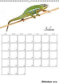 Sportliche Tiere (Wandkalender 2018 DIN A3 hoch) - Produktdetailbild 10