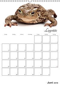 Sportliche Tiere (Wandkalender 2018 DIN A3 hoch) - Produktdetailbild 6