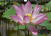 Stille Momente in Laos (Wandkalender 2018 DIN A4 quer) - Produktdetailbild 7