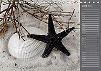 Strandgut / Geburtstagskalender (Tischkalender 2018 DIN A5 quer) Dieser erfolgreiche Kalender wurde dieses Jahr mit glei - Produktdetailbild 4