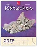 Süße Kätzchen 2017