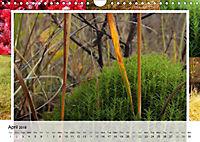 Swamplands Nature's Paintbox (Wall Calendar 2018 DIN A4 Landscape) - Produktdetailbild 4