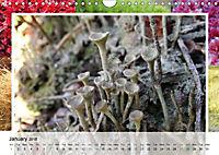 Swamplands Nature's Paintbox (Wall Calendar 2018 DIN A4 Landscape) - Produktdetailbild 1