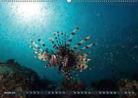 Tauchen, Fische und Meer (Wandkalender 2018 DIN A2 quer) - Produktdetailbild 1