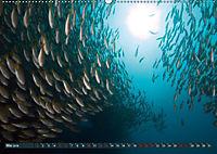 Tauchen, Fische und Meer (Wandkalender 2018 DIN A2 quer) - Produktdetailbild 5