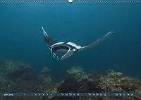 Tauchen, Fische und Meer (Wandkalender 2018 DIN A2 quer) - Produktdetailbild 6