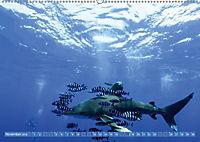 Tauchen, Fische und Meer (Wandkalender 2018 DIN A2 quer) - Produktdetailbild 11