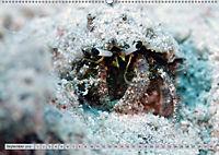 Tauchen, Fische und Meer (Wandkalender 2018 DIN A2 quer) - Produktdetailbild 9