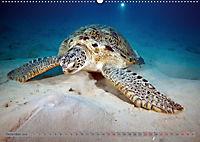 Tauchen, Fische und Meer (Wandkalender 2018 DIN A2 quer) - Produktdetailbild 12
