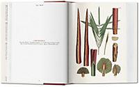 The Book of Palms - Produktdetailbild 2