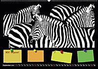 Tierwelt aus Mausopardia (Wandkalender 2019 DIN A2 quer) - Produktdetailbild 9