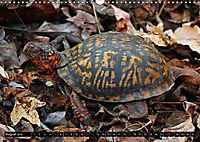 Turtles and Tortoises - Armored pacifists (Wall Calendar 2018 DIN A3 Landscape) - Produktdetailbild 8