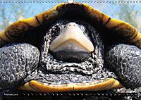Turtles and Tortoises - Armored pacifists (Wall Calendar 2018 DIN A3 Landscape) - Produktdetailbild 2