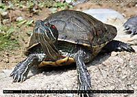 Turtles and Tortoises - Armored pacifists (Wall Calendar 2018 DIN A3 Landscape) - Produktdetailbild 4