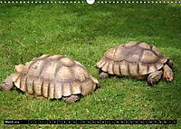 Turtles and Tortoises - Armored pacifists (Wall Calendar 2018 DIN A3 Landscape) - Produktdetailbild 3