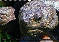 Turtles and Tortoises - Armored pacifists (Wall Calendar 2018 DIN A3 Landscape) - Produktdetailbild 6