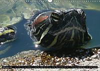 Turtles and Tortoises - Armored pacifists (Wall Calendar 2018 DIN A3 Landscape) - Produktdetailbild 1