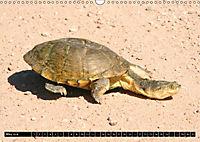 Turtles and Tortoises - Armored pacifists (Wall Calendar 2018 DIN A3 Landscape) - Produktdetailbild 5