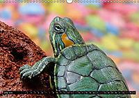 Turtles and Tortoises - Armored pacifists (Wall Calendar 2018 DIN A3 Landscape) - Produktdetailbild 7