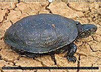 Turtles and Tortoises - Armored pacifists (Wall Calendar 2018 DIN A3 Landscape) - Produktdetailbild 9