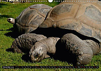 Turtles and Tortoises - Armored pacifists (Wall Calendar 2018 DIN A3 Landscape) - Produktdetailbild 12
