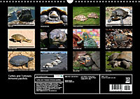 Turtles and Tortoises - Armored pacifists (Wall Calendar 2018 DIN A3 Landscape) - Produktdetailbild 13