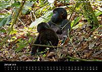 Ugandas friedliche Berggorillas (Wandkalender 2018 DIN A4 quer) Dieser erfolgreiche Kalender wurde dieses Jahr mit gleic - Produktdetailbild 1
