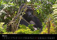 Ugandas friedliche Berggorillas (Wandkalender 2018 DIN A4 quer) Dieser erfolgreiche Kalender wurde dieses Jahr mit gleic - Produktdetailbild 5