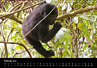 Ugandas friedliche Berggorillas (Wandkalender 2018 DIN A4 quer) Dieser erfolgreiche Kalender wurde dieses Jahr mit gleic - Produktdetailbild 2