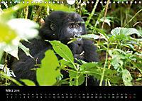 Ugandas friedliche Berggorillas (Wandkalender 2018 DIN A4 quer) Dieser erfolgreiche Kalender wurde dieses Jahr mit gleic - Produktdetailbild 3