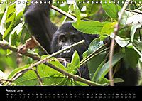 Ugandas friedliche Berggorillas (Wandkalender 2018 DIN A4 quer) Dieser erfolgreiche Kalender wurde dieses Jahr mit gleic - Produktdetailbild 8