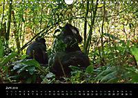 Ugandas friedliche Berggorillas (Wandkalender 2018 DIN A4 quer) Dieser erfolgreiche Kalender wurde dieses Jahr mit gleic - Produktdetailbild 6